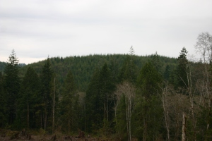 Overlook of City of Montesano's Forest