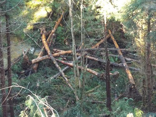 Engineered-Log-Jam-Created-By-White-Zumstein Logging